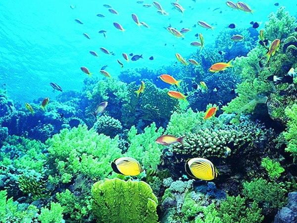 レンボンガンの海中のサンゴ礁と熱帯魚