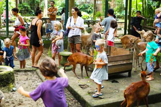 草食動物へのエサあげをする子供たち