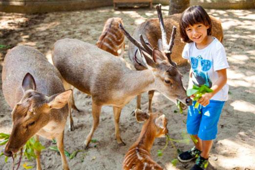 草食動物たちとの触れあう子供