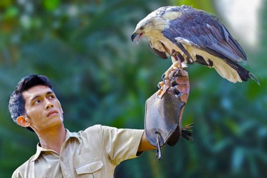 飼育員の腕にとまる鷹