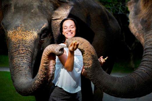 象にエサをあげる女性
