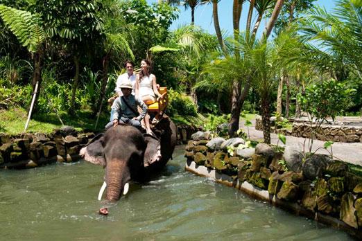 水の中に入っていく象