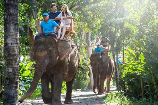 自然の中を行く象と利用客