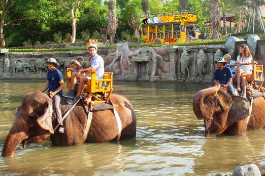 池の中を象にのって楽しむ家族