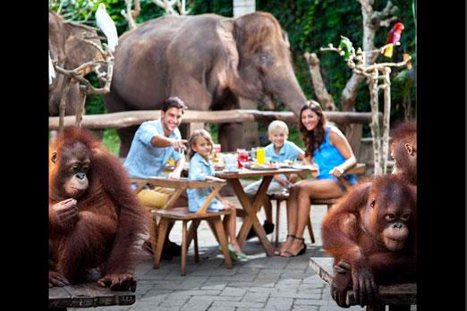 象やオランウータンと一緒に朝食を楽しむ家族