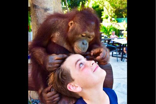 オランウータンの赤ちゃんと子供のふれあい