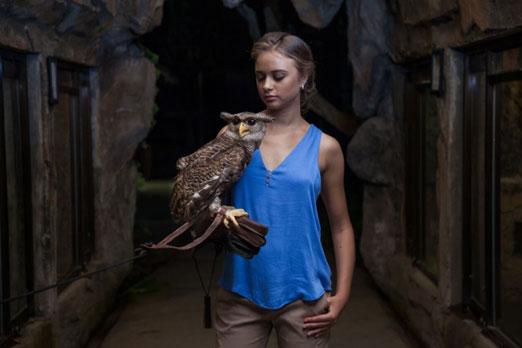 フクロウを腕にのせる少女