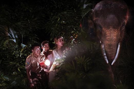 夜のサファリで象に出会う