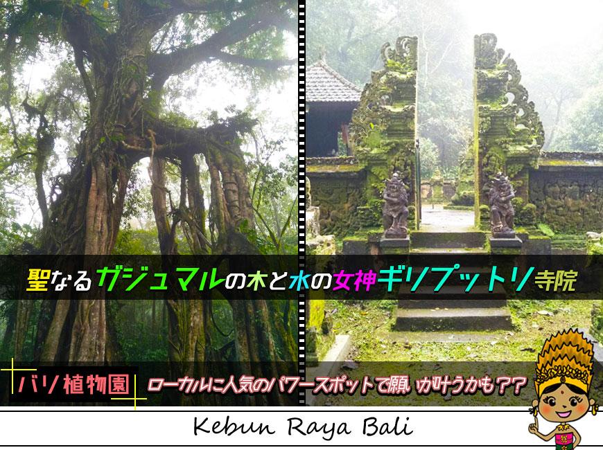 パワースポットで有名な聖なるガジュマルの木と水の女神ギリプットリ寺院