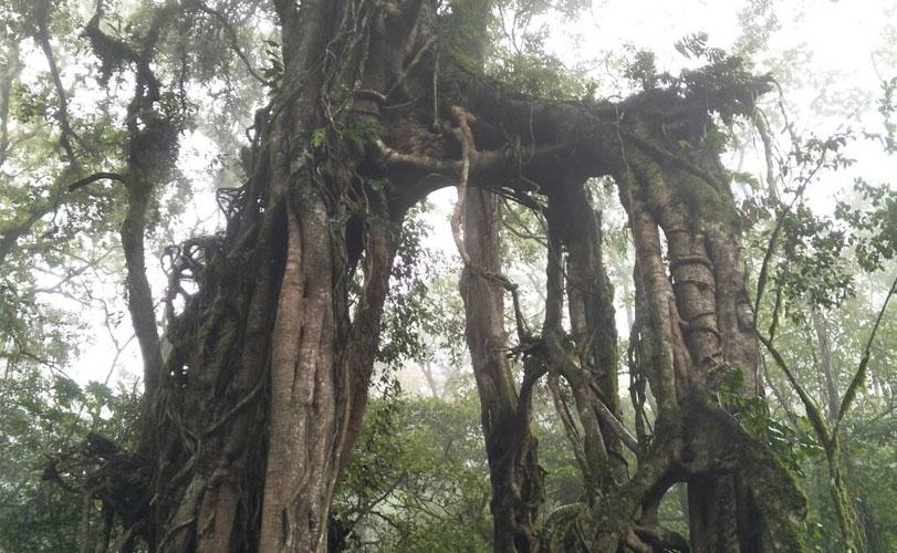 バリ島で沐浴とガジュマルの木のパワースポット