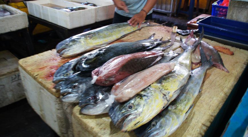 ジンバランの魚市場内に陳列された沢山のシーラ