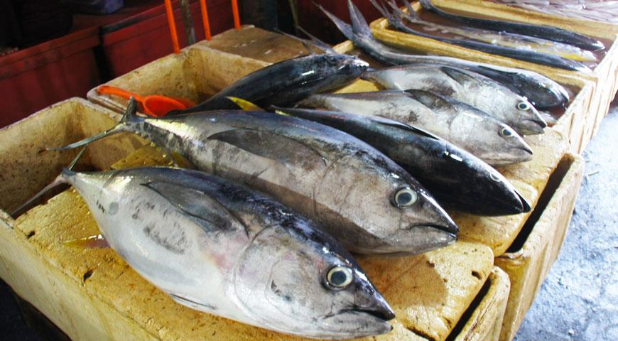 ジンバランの魚市場内に陳列された沢山のマグロ