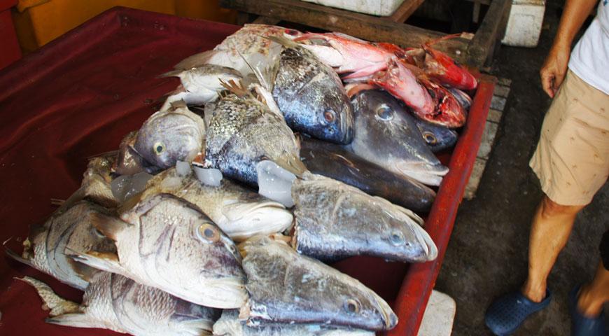 ジンバランの魚市場内に陳列された沢山の魚の頭