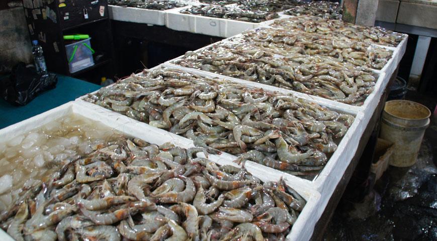 ジンバランの魚市場内に陳列された沢山の白いエビ