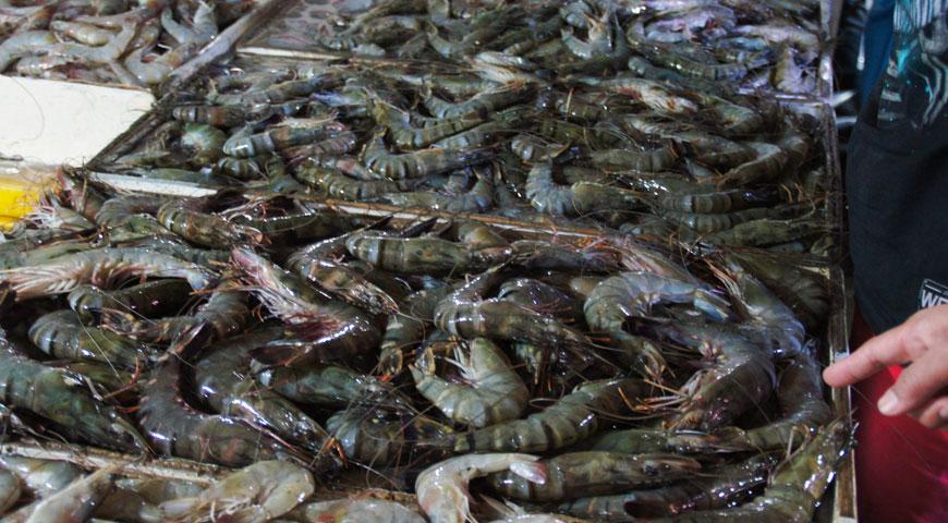 ジンバランの魚市場内に陳列された沢山の大きなブラックタイガーエビ