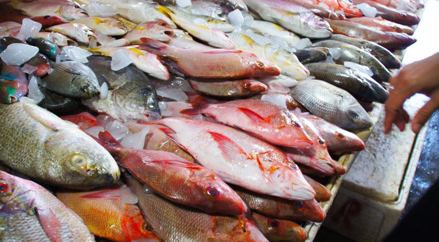ジンバランの魚市場内に陳列された沢山の新鮮な魚