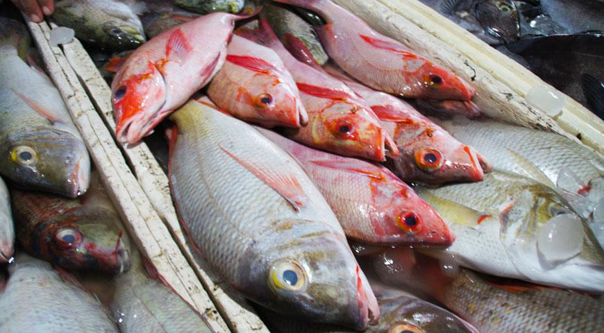 赤い色をした沢山の魚