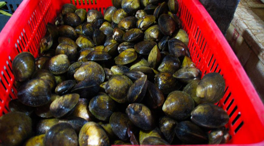 ジンバランの魚市場内に陳列された沢山の貝