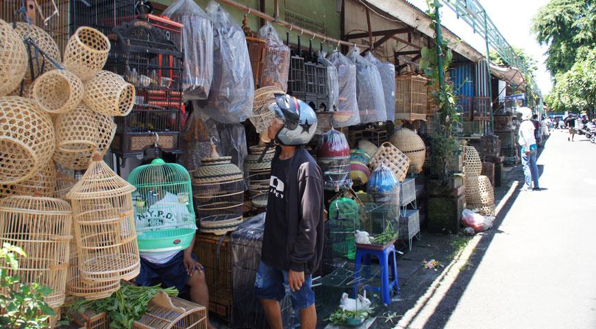 鳥市場に買いきたヘルメットをかぶったおじさん