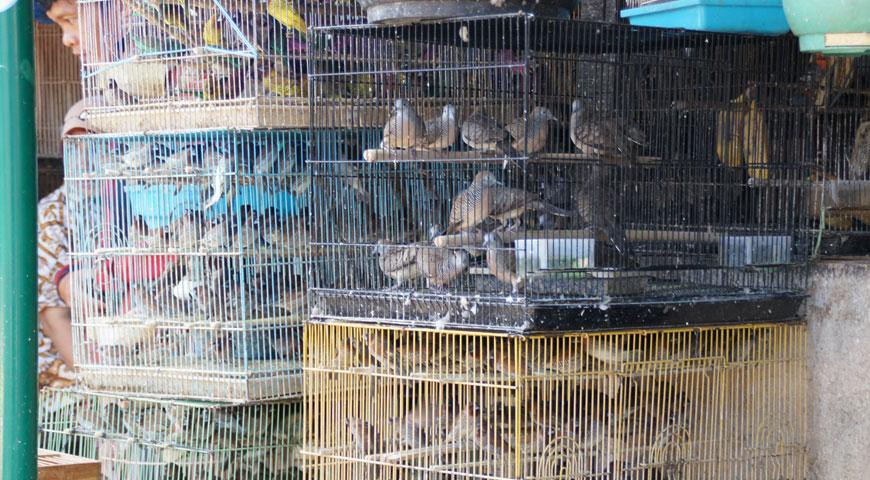 鳥かごに入れられた沢山の小鳥