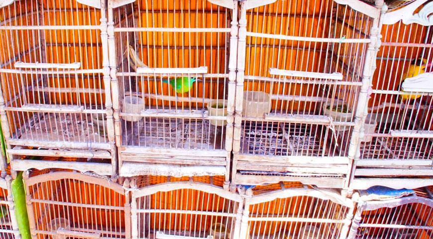 鳥かごに入れられているカラフルな鳥