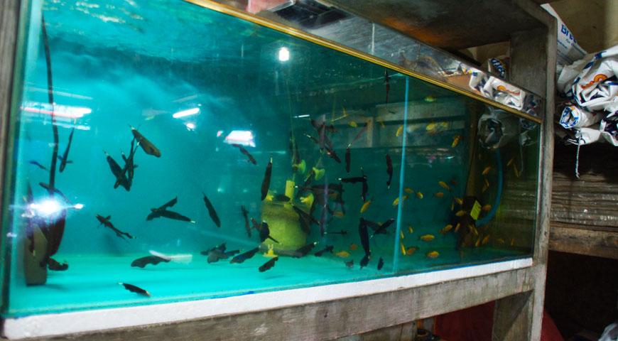 多様多種な熱帯魚