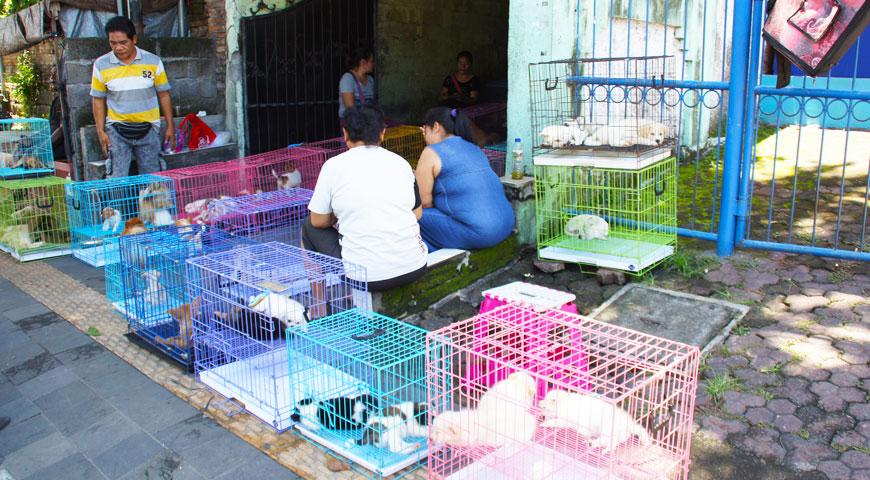 子犬売場で買い物をする夫婦