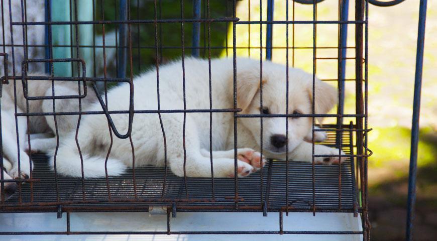 こちらを見ている白い子犬
