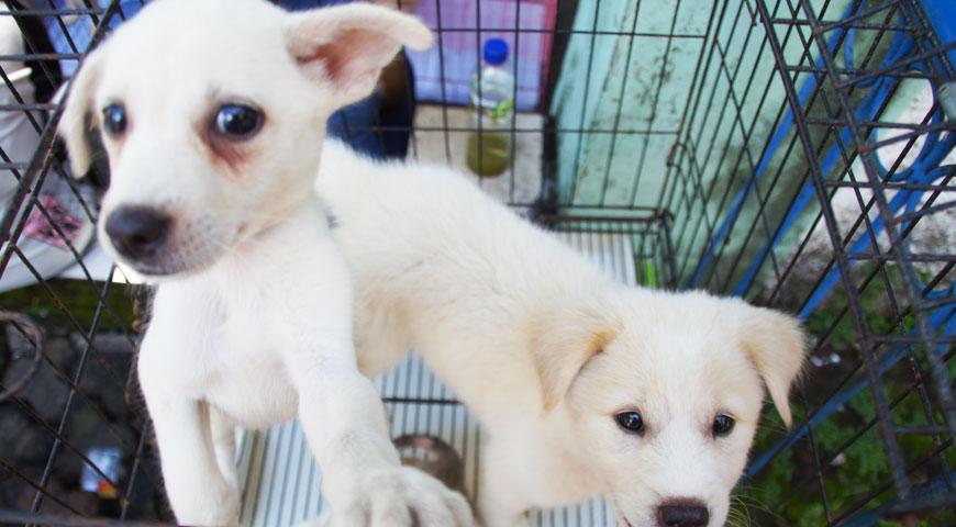愛嬌をふるまく白い犬