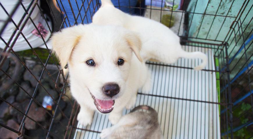 かわいい子供のキンタマーニ犬