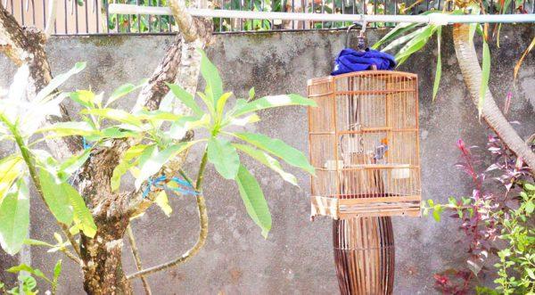 庭先に吊るされた鳥かご