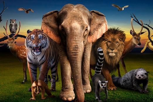 沢山の動物がこちらを見つめるイメージ