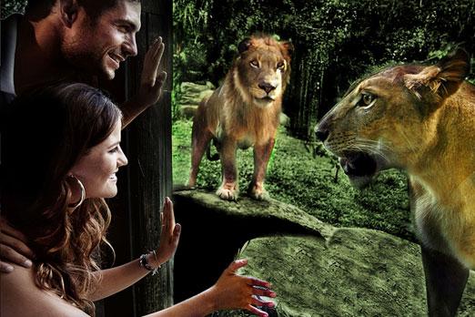 ライオンが近くまで寄ってくるレストラン